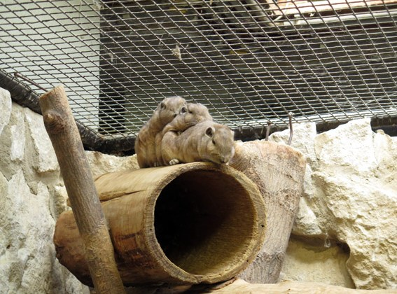 Artis Zoo, o zoológico de Amsterdam
