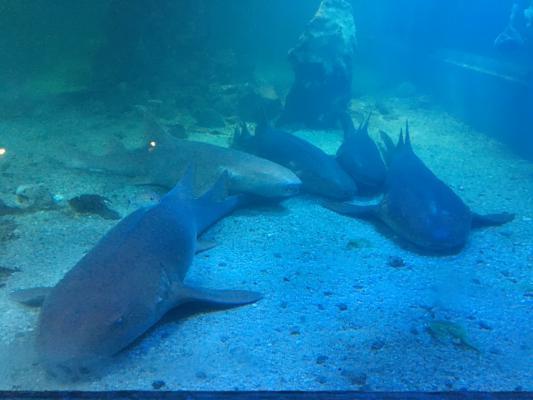 Ilha dos aquarios Arraial D'Ajuda