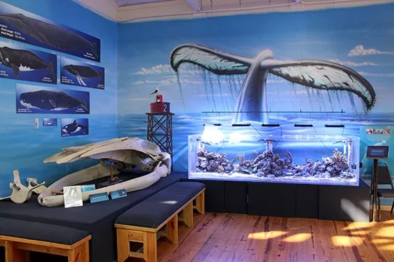 Marine Science Center Daytona Beach aquario