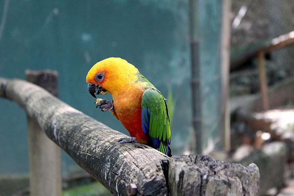 Hot Park - Birdland