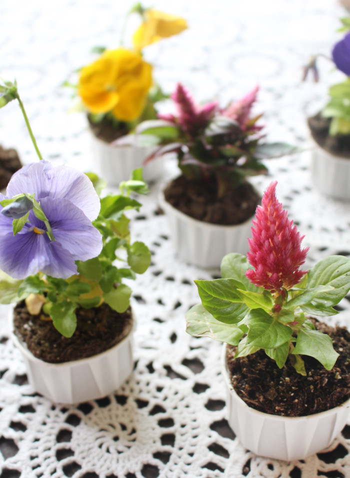 Plant flowers in cupcake liners for a sweet gift. Perfect for Mother's Day! Via A Joyful Riot