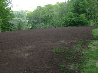 New lawn pic 5