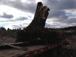 Stump removal 3