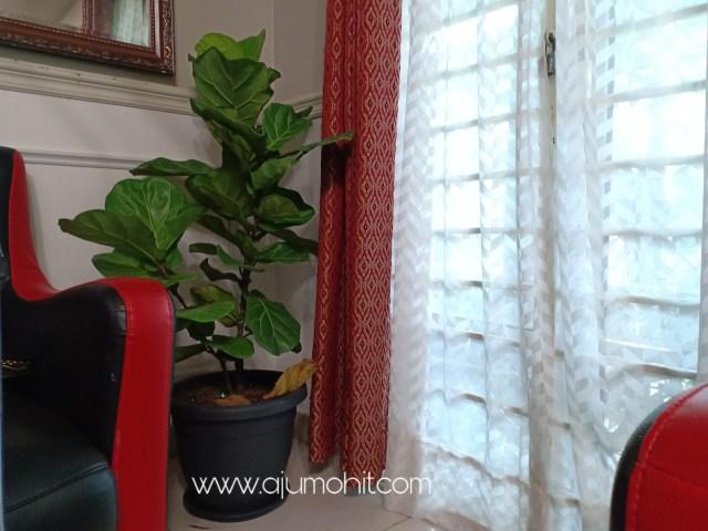 pokok indoor dalam rumah