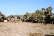 صورة كربلاء :: مديرية الزراعة تدعو الحكومة المحلية باتخاذ اجرارات لوقف تفتيت الاراضي