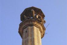 صورة اجتماع طارىء بجامعة القاهرة الاسبوع المقبل لحماية التراث الحضاري السوري