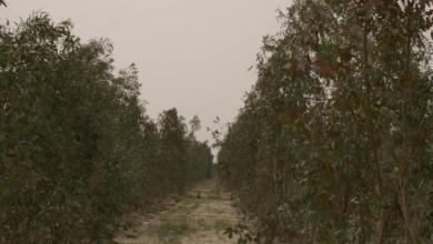 صورة زراعة كربلاء تخصص 300 مليون دينار لمشروع غابات الرزازة