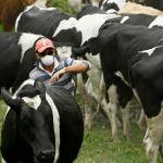الصحة البشرية مهددة من مرض السل الحيواني