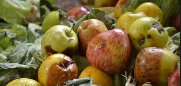 ضبط 4 أطنان من التفاح الإيراني في الشلامجة معد للتهريب