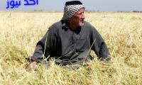 الزارعة تصدر 8 قرارات لدعم الانتاج الزراعي والوصول للاكتفاء الذاتي