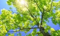 توقعات بأجواء مشمسة وانخفاض مقبل على درجات الحرارة