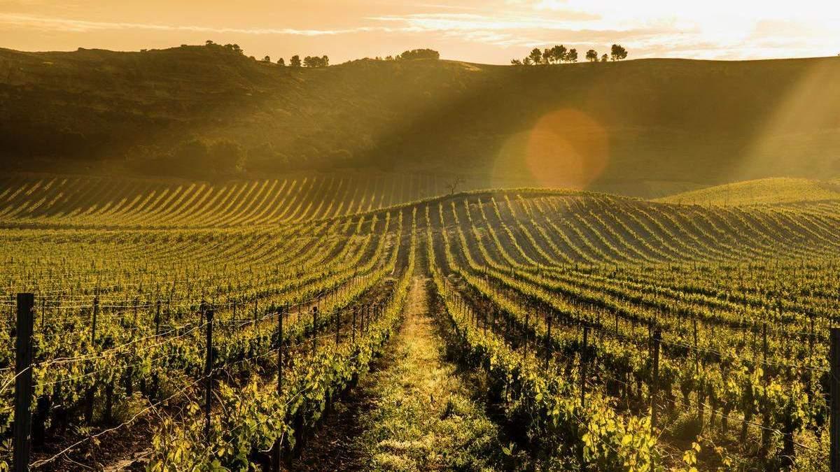 Pago de Carraovejas, uno de los 100 mejores viñedos del mundo | AkataVino Magazine