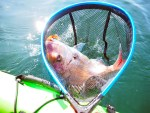 カヤックフィッシングでタイラバにチャレンジ!ついに大きな真鯛を釣ったぞ!