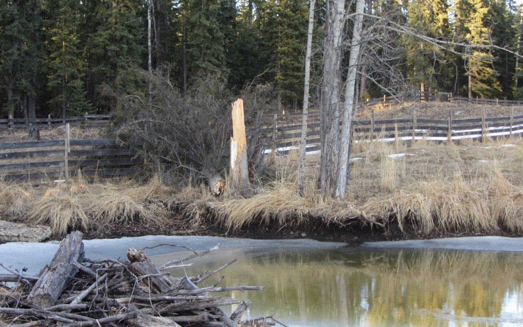 Tree 1 – Fence 0