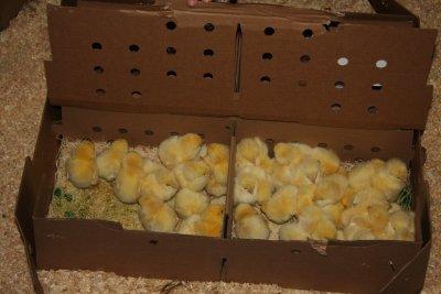 More chicks!