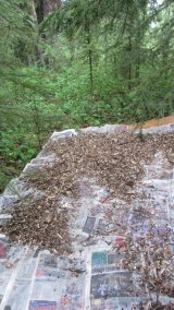 Newspaper and wood chips