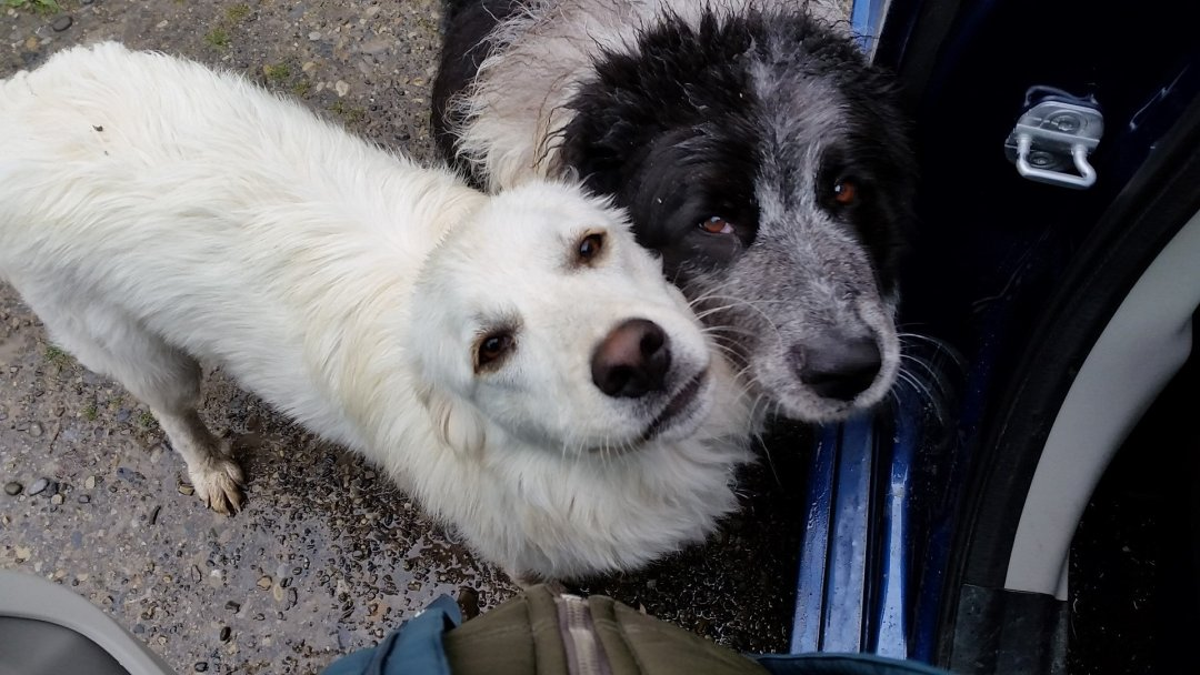Dogs wanting some love