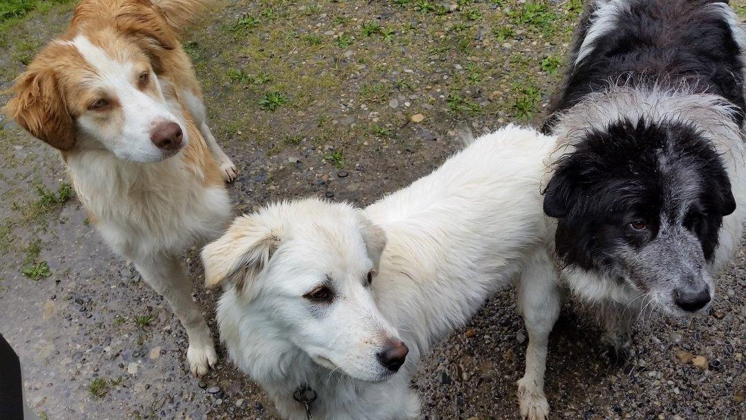 Dogs in the rain