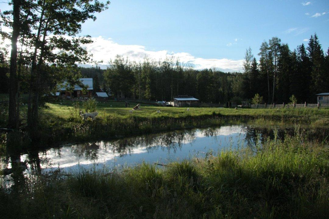 Paddock pond