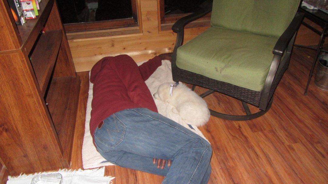 Kwesi and Titan asleep