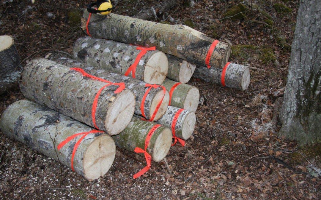 Trembling Aspen Logs