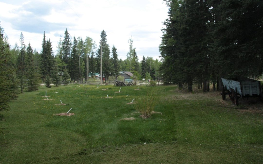 Food Forest Expansion