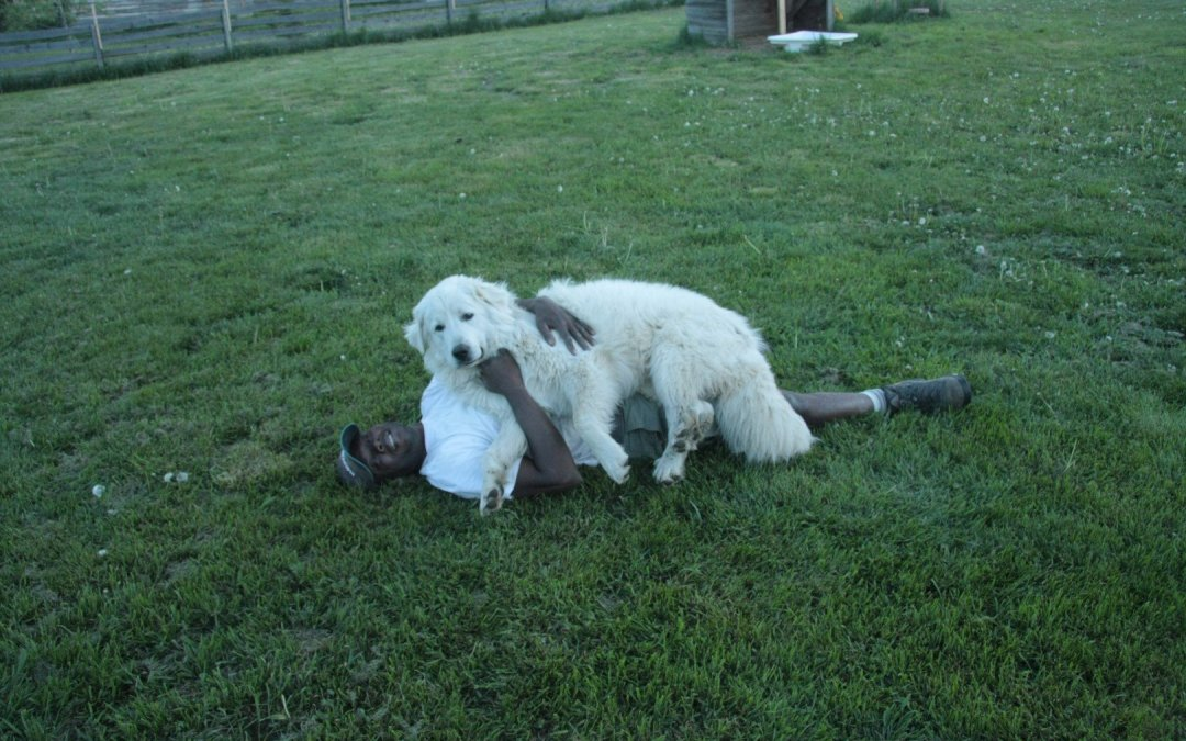 Kwesi and dogs