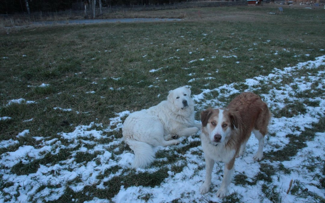 Dogs – cool weather