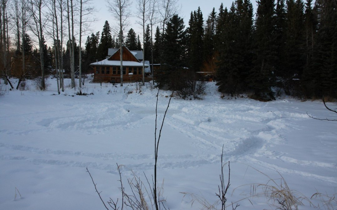 Five children + snow + frozen pond