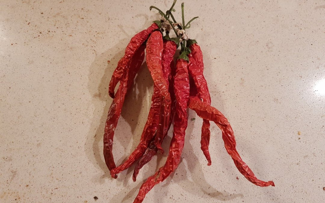 Witch Stick – Hot Peppers?