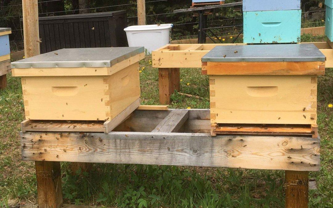 Bee Hive Splits for sale