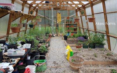 Greenhouse – Progress