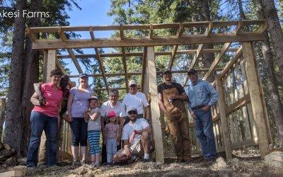Wood shed – progress