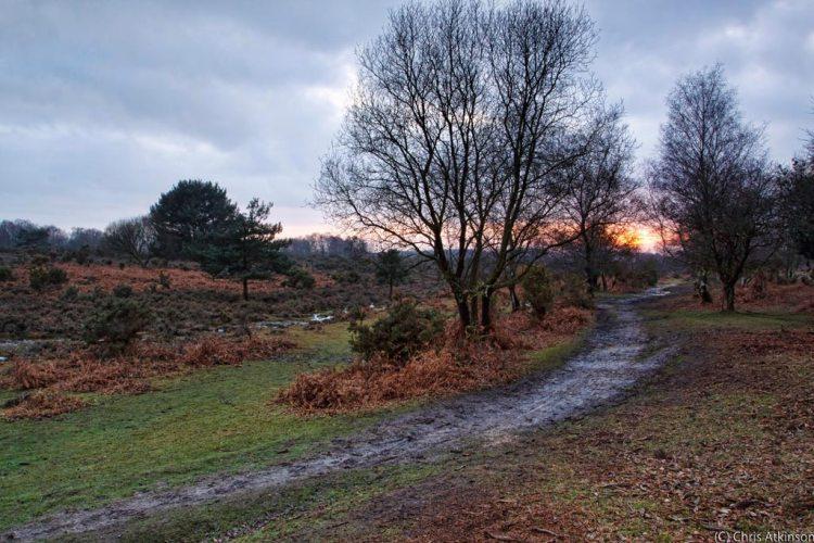 Setting Winter Sunset at Appleslade, New Forest - Landscape