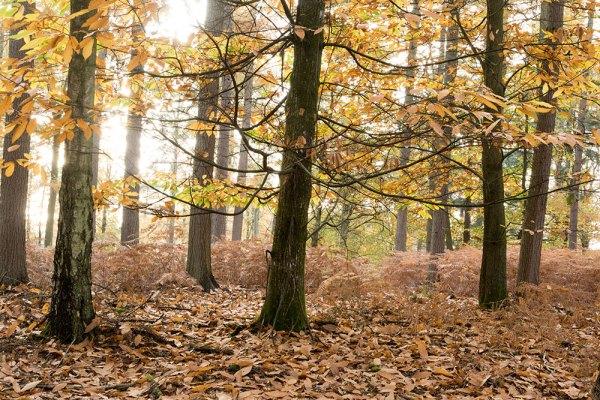 Anderwood Autumn 1 Original