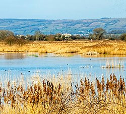 Ham Wall wetlands pano