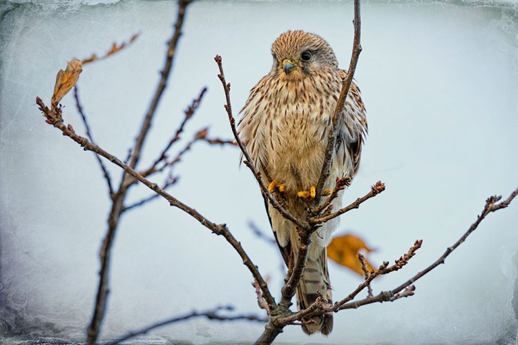 Kestral at Tuckton Effected
