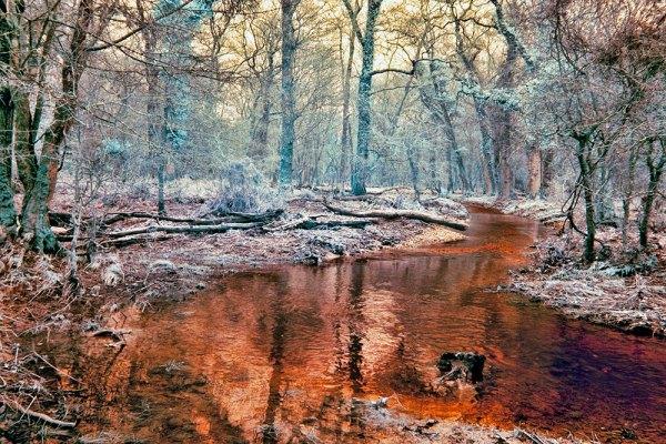 Rhinefield Winter Woods