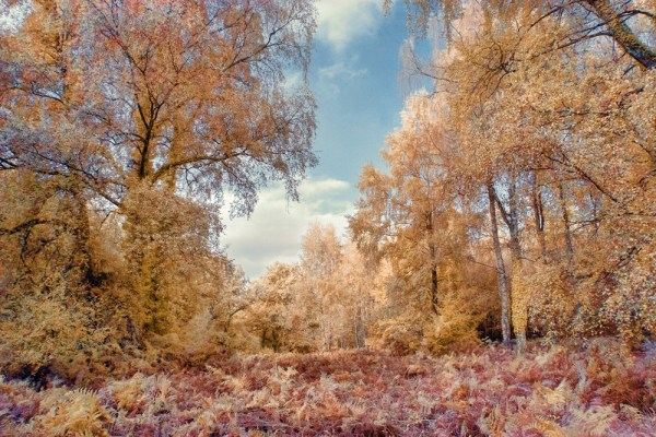Autumnal Infrared