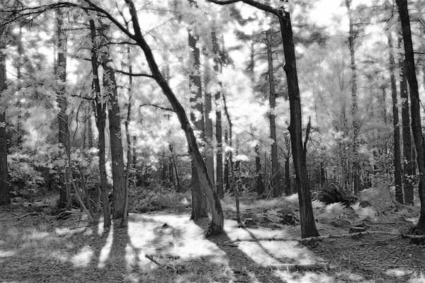 White Wood