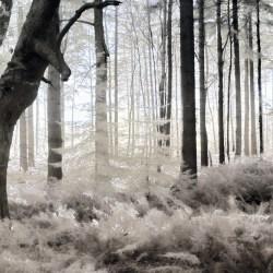 Whispy Wood