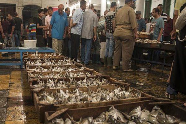 ارتفاع البوري وهبوط المكرونة.. أسعار الأسماك بسوق العبور اليوم الخميس