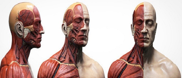 Tope of Anatomy