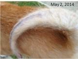 Tail - May 2, 2014