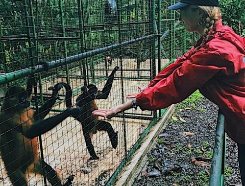 Refugio de animales en Costa Rica