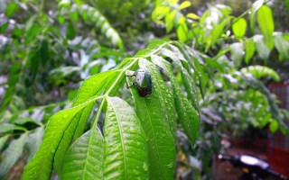 Insecticides naturels