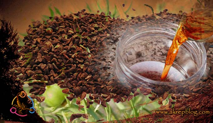 Üzerlik Tohumu Yağı Nasıl Yapılır? Nasıl Çıkarılır? Nasıl Kullanılır? Faydaları nelerdir?