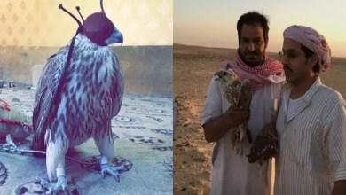"""Photo of """" حمامة """" تجلب 100 ألف ريال سعودي لأصحابها"""