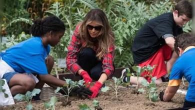 Photo of بالفيديو .. ميلانيا ترامب تزرع و تجني الخضار ببستان ميشال أوباما