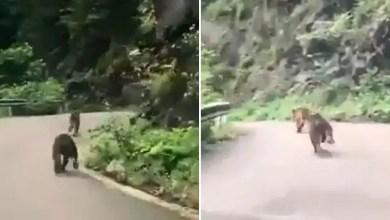 Photo of ذعر بسبب دبين يركضان على طريق سريع في مدينة تركية ! ( فيديو )